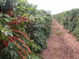 Vendo terreno já produzindo café
