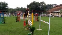 Cavalo de hipismo bh