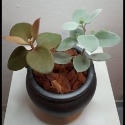 Vende-se arranjo de cerâmica, com suculenta colher de cobre e de prata.