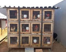 Viveiros/Galinheiros/Baias para aves