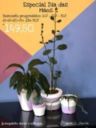 Vasos de cimento com plantas naturais.