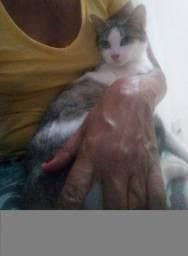 Filhote gata castrada 4 meses