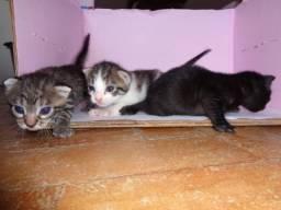 Gatinhos para adoção - Cada um mais lindo que o outro