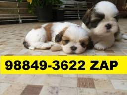 Canil Filhotes Premium Top Cães BH Lhasa Poodle Yorkshire Beagle Basset Shihtzu Maltês