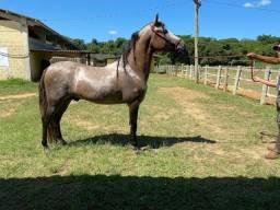 Cavalo Mangalarga pra Pessoas exigentes ! 30x boleto