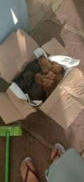 Cachorrinhos para doação