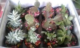 Plantas Itacoatiara