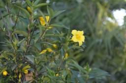 Floricultura Monte dos Palmares ornamentais