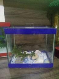 Vendo esse aquário pra peixe beta vai completo sem avarias