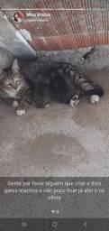 Gente adote um gatinho *