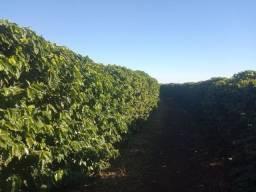 Fazenda em piumhi 55 alqueires 6.000.000.00