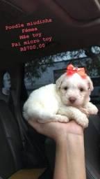 Poodle Mine toy / VOCÊ NÃO PODE PERDER !