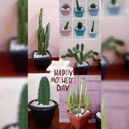 Presenteie sua esposa, mãe com um cacto lindooo , decorado, no vasinho?