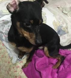 Doação urgente de cachorro vira lata
