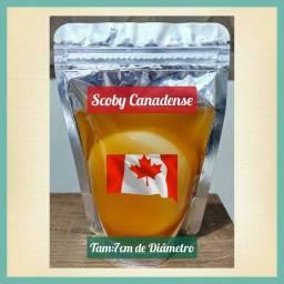 Scoby Canadense tam:7cm de diâmetro