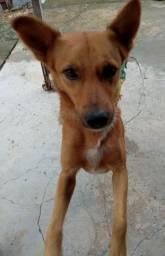 Doasse  um cachorro ,cujo os donos  vão viajar é não tem como levar, idade dele é 2 anos