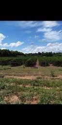 Sítio à venda por R$ 1.350.000 - Zona Rural - Nova Brasilândia D'Oeste/RO