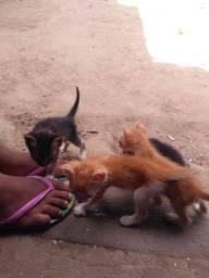 Filhote de gato, Doação