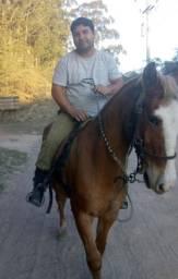 Cavalo bem domado