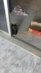 Gato  com castração