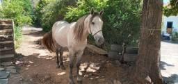 Cavalo sem registro 3 anos e 6 meses