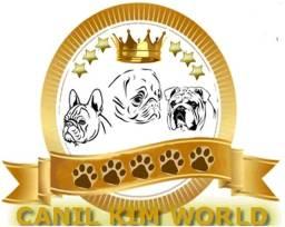 Adestramento de Cães - Kim World