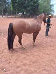 Cavalo muito mando e barato!
