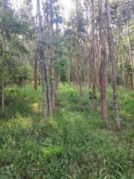 Propriedade Rural com Reflorestamento