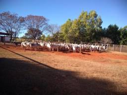 Excelente fazenda em Engenheiro Navarro Minas Gerais !!!