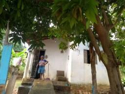 Uma casa boa pra morar muitas pé de manga-caju-banana-acerola-goiba