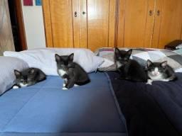 Doa-se Filhotes de Gato Machos.
