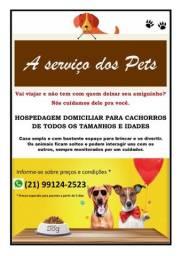 Hospedagem para cachorros