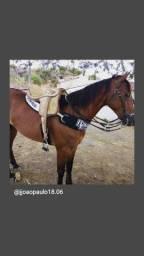 Égua de canhota pra vender ou trocar.