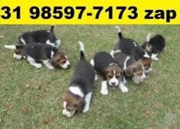 Canil Lindos Cães Filhotes BH Beagle Poodle Maltês Shihtzu Lhasa Yorkshire Basset Pug
