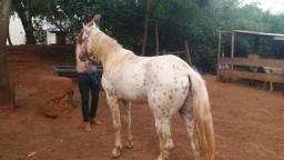 Cobertura de Cavalo