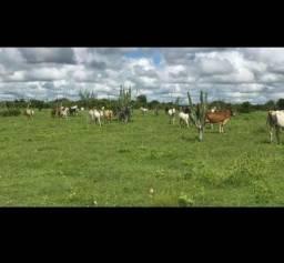 Otima Fazenda com 190 Hectares entre Bom jesus e São Pedro