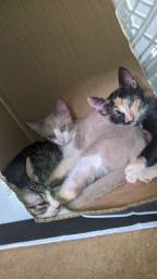 Doação de 3 gatinhas fêmeas!