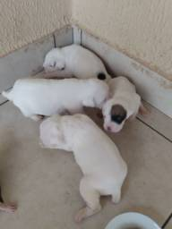 Cachorro box