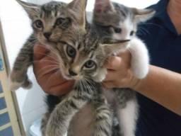 Doando filhotes de gatinhos de dois meses.