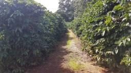 Vendo Sítio na região do Guatimi em Ibiraci, melhor local para cultivo de café da região