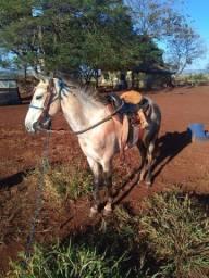 Égua 1/2 sangue mangalarga marchador