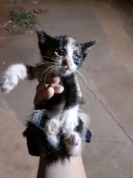 Gato fêmea Presiso doar urgente