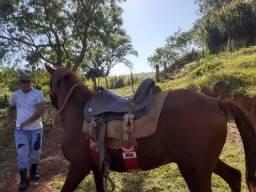 Cavalo ótimo