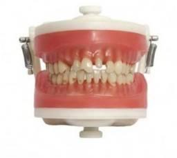 Manequim Dentário novo