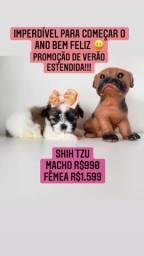 Promoção de Verão estendida! +LINDA +TOP Shih Tzu Fêmea R$1.599