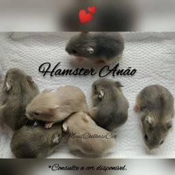 Hamster Anão e Acessórios -Leia o anúncio