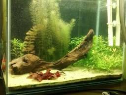 """""""Áquarios sindfish tb faz planteds/biotópos."""