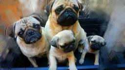 Pugs (filhotes)