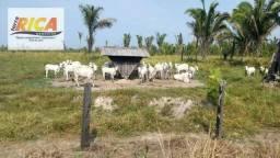 Fazenda com 1000 Hectares à venda em Canutama/AM Cód. FA0132