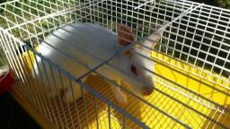 Vendo coelho e gaiola